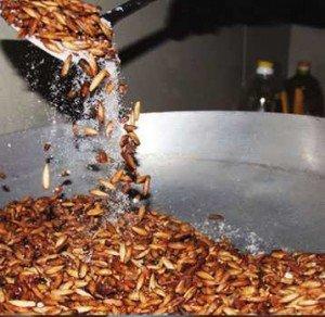 Hạt Bàng Côn Đảo Rang Muối theo phương pháp truyền thống